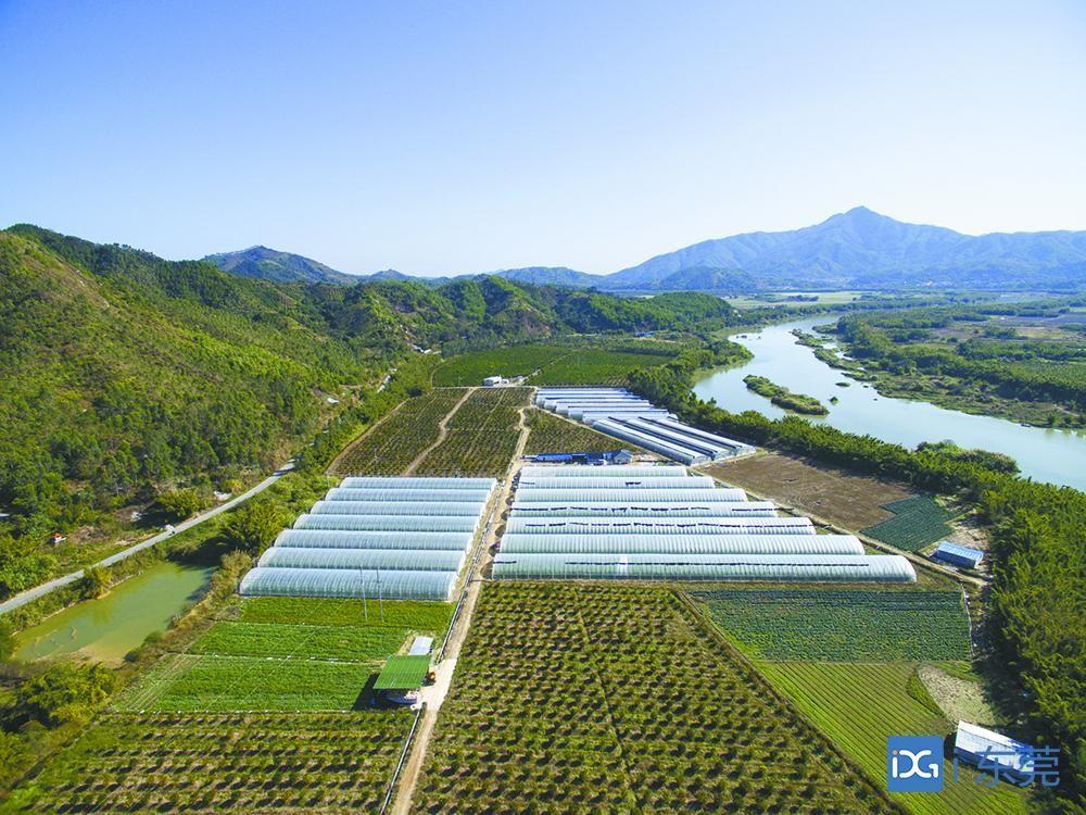 截至今年10月底,东莞帮扶揭阳脱贫比例达96.9%